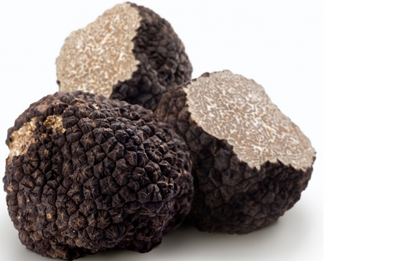 Truffels, het goud van Le Marche